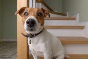 犬が急に階段を上らなくなった!5つの原因と対処法