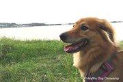 犬の気持ちを知るために必要なこと ~環境エンリッチメントについて~