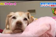「会いたい」…引退した盲導犬と元パートナーの感動の再会