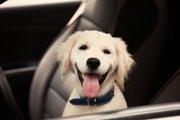 犬が首輪を嫌がる!4つの原因と改善方法