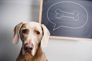 どうして犬は骨が好きなの?与える際の注意とポイント