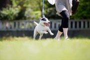犬が散歩の後に暴れる原因と対処法