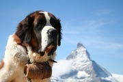 スイス犬6種類を紹介!世界中で愛されているわんちゃんたち