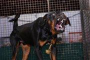 犬の攻撃行動を長期間見逃すと改善が難しい⁈私達がすべきこと