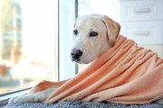 老犬をシャンプーするときの注意点