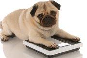犬の肥満のボーダーラインとは?