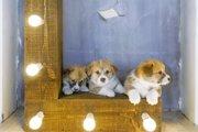 犬の留守番中、電気(明かり)は付けていたほうがいいの?
