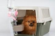 犬が給水器でお水を飲まない!その理由と覚えさせる方法