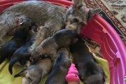 茂みの中で出産したばかりの母犬と子犬たちの救出劇