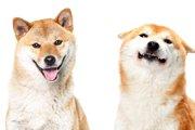 耳の向きや動きでわかる『犬の気持ち』