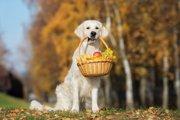 犬も食べられる秋の食べ物12選