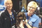 ピリピリ空気が和やかに!リオオリンピックに導入されたセラピー犬(まとめ)