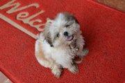 犬が床で滑らないようにする方法とおすすめの商品