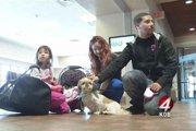 誘拐された犬がマイクロチップのおかげで奇跡の再会を果たす!
