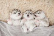 なぜ犬は眠る時間が長いのか?