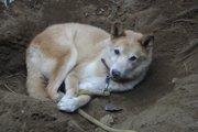 捨て犬の十戒を、あなたは知っていますか?
