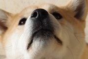 犬が鼻血を出したら!その原因と考えられる病気について