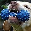 犬の「噛み癖」を直すヒント!原因はストレスと体調不良かも?