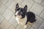 犬が見せる5つの拒否行動とそれぞれの心理状態