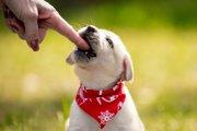 犬が甘噛みしてくるときの4つの心理