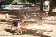 犬の社会化不足と問題行動 1/3:攻撃性と分離不安