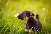 犬が食べると危険な野草とは?