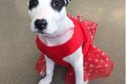 【感動!】火災で命に危機に遭遇した子犬が命の恩人と再会