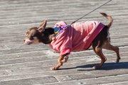お散歩で「対人・対犬恐怖症」になってしまった愛犬のトラウマ誕生の秘話