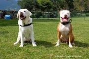 犬の興奮を制御してストレスを下げるトレーニング