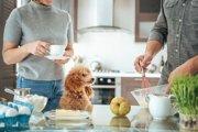 犬にとって台所は危険な遊び場…!入らないように対策をしよう