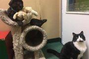 犬・猫・ねずみの「仲良し異種トリオ」の引き取り手を募集したところ。