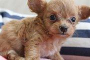 大人気ミックス犬の種類15選!(画像)