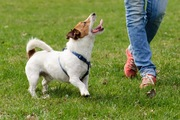 愛犬が取れる資格「家庭犬訓練試験(コンパニオン・ドッグ)」とは?