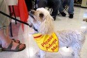 犬目線の素敵な詩「I Rescued A Human Today」