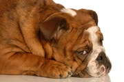 犬に罪悪感はあるの?叱られた時の表情や仕草の意味を考えてみる