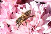 犬が蜂に刺されたら!適切な対処法と死を招くアレルギーについて