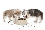 犬が遊び食いをする原因とは?止めさせる方法や対処法