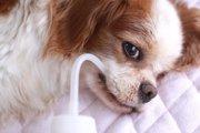 犬も「秋バテ」になる?体調管理を考えよう
