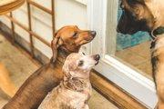 犬が怒っているときの4つの表情や仕草・行動