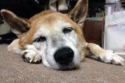 「病気になってからじゃ遅かった」 愛犬の介護を通じて感じた事