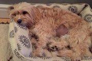 散歩中に犬が誤飲をして死亡…原因はトウモロコシの芯だった!