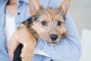 愛犬が他の犬に噛まれた時の対処法とは?