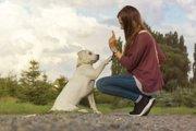 犬の散歩トレーニングやオスワリまで役に立つトレーニング法「マグネット遊び」とは?