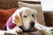 8歳を超えた愛犬の行動変化は、認知症を疑ってみましょう