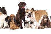 日本も意外と多い?原産国である犬種が多い国ランキング