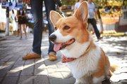 お散歩での子犬の社会化において意識するポイント
