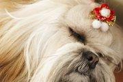 犬の鼻の色が変化する「ウィンターノーズ」とは?