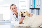 犬の全身麻酔はどのような影響がある?副作用とやるべき事