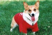 犬服のサイズの正しい測り方と選び方