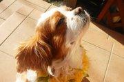 犬の名付けに悩んでいるあなた、ハワイ風のオシャレな名前はいかがですか?
